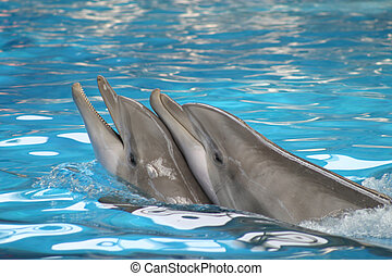 Freinds - Dolphins playing in a pool