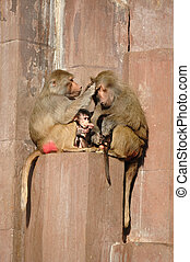 Monkey family sitting in the sun