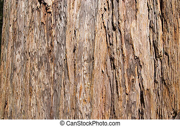 Red Wood - Muir Woods National Monument is a unit of the...