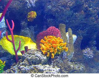 coral, rocas