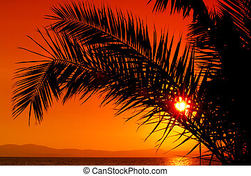 Palm tree during sunset - Picture of a setting sun partially...