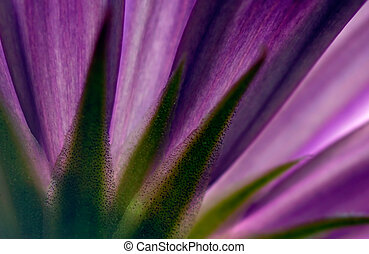 Violet flower - Picture shows a violet flower captured from...