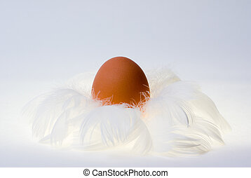 egg in feathers nest - Egg in white feather nest Opposition...