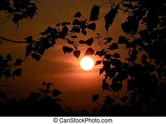 silhouette of leaves at sunset