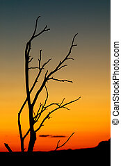 Desert tree silhouette on sunset