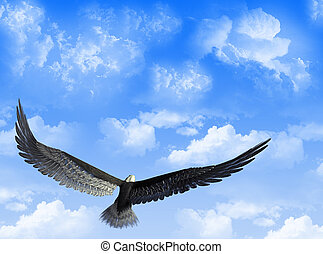 Eagle in the sky - An eagle flight against a sky with white...