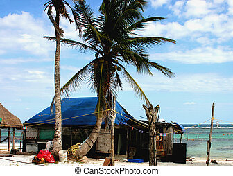 Beachfront shack under palm trees