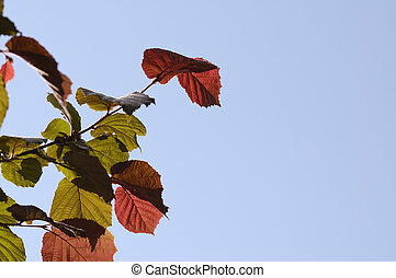 colorful leaves on blue sky
