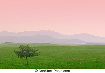 Lone Tree at Sunrise - A lone pine tree, stunted by the...