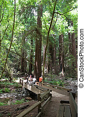 Muir Woods National Monument is a unit of the National Park...
