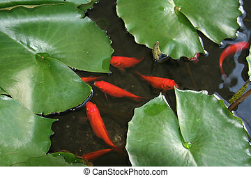 Fish and Lily Pads - Bright orange fish and lily pads.