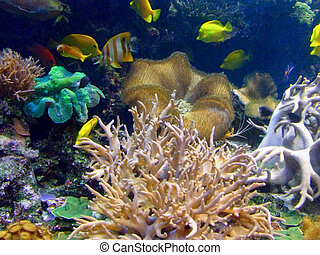Coral life - Tropical fishes in the beautiful coral reef