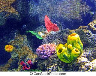 sol, coral