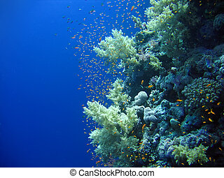Underwater landscape with many small fish. The Red sea