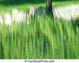 Willow Reflections - Reflections of a weeping willow in a...