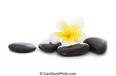 Pebbles and frangipani - black pebbles and frangipani on...