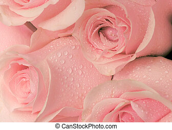 Dew on the roses - Bouquet of tender cream roses with the...