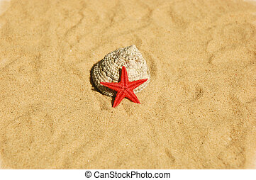 Red Star on Sand - a red star siting on a shell on sand