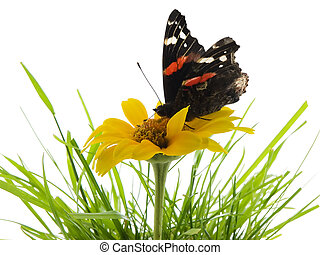 Butterfly on daisy - Butterfly on a daisy in grass with...
