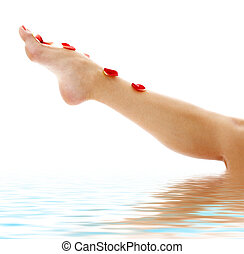 leg with red rose petals in water - long leg covered with...