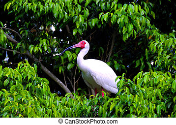 Heron - A heron sitting on the top of a tree in a tropical...