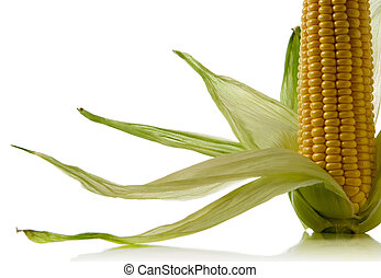corn cob - close-up of a corncob isolated over white...