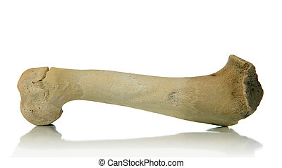 bone - isolated bone over white background