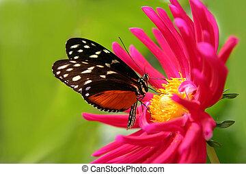 butterfly on a flower - nice butterfly on a fushia flower