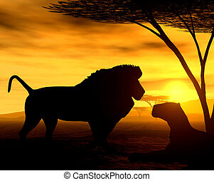 The Lions - Illustration of african lions