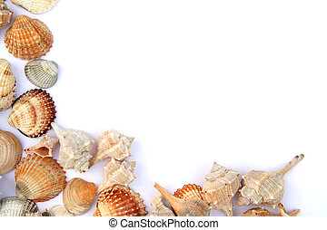 Shells - Different shells isolated on a white background
