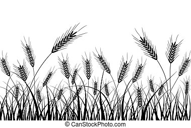 Grass and ears, vector - Grass and ears,  illustration