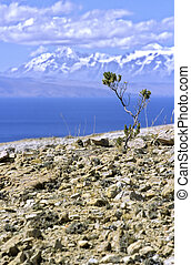 Isla del Sol- Bolivia - Small plant on arid terrain of Isla...