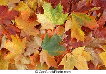Autumn leaves - Leaves background