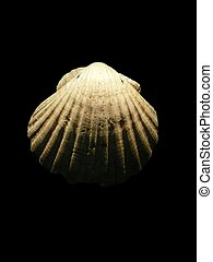 Scallop - I took this photo on my way to Santiago de...