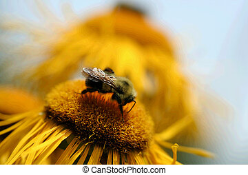 Bumble Bee - Macro image of a bumble bee, shallow depth of...