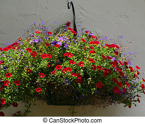 Flower hanging basket - A hanging basket is planted with red...