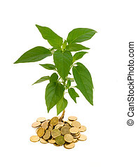 Conceptual profit - Plant rising from a pile of golden coins...