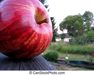 Apple 2 - A part of nature