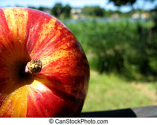 Apple 4 - A part of nature
