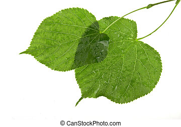 Structure of wet leaves isolated on white background