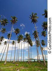 Tropical beach with tall coconut tree