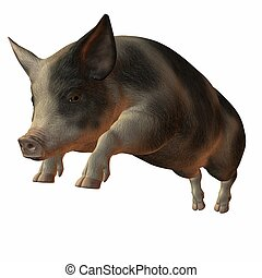 Pig - 3D Render