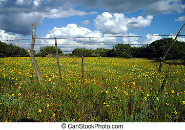 Texas Wildflowers Over The Fence - A meadow filled with...