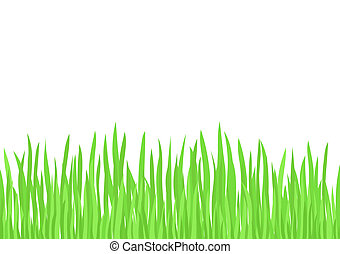 Green Grass vector - Green Grass illustration