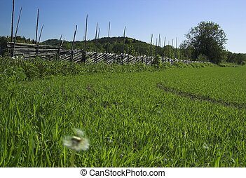 Summer in Norway - A grass field, a diagonal fence, a tree...