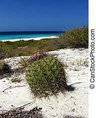 Catus on the beach - Cactus on a tropical beach with ocean...