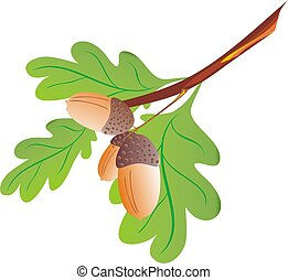Oak branch - Branch with leaf of an oak with an acorn
