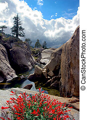 Cleos Bath - Red Sierra Nevada Wildflowers, Cleos Bath...