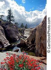 Cleo\\\\\\\'s Bath - Red Sierra Nevada Wildflowers,...