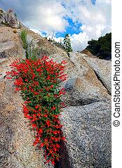 Red Wildflowers On Granite